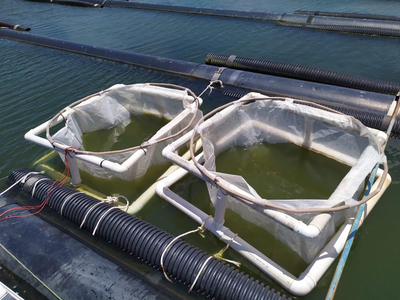 Cogerh e pesquisadores britânicos testam experimento que melhora qualidade da água